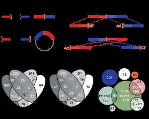Circular RNAs are a large class of animal RNAs with regulatory potency.