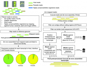 Genomic-scale exchange of mRNA between a parasitic plant and its hosts.