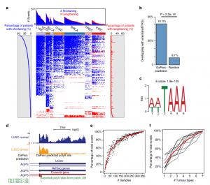Dynamic analyses of alternative polyadenylationfrom RNA-seq reveal a 30-UTR landscape acrossseven tumour types