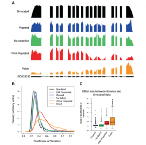 IVT-seq reveals extreme bias in RNA sequencing