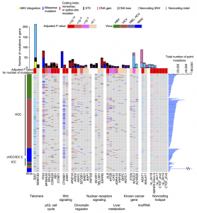 Whole-genome mutational landscape and characterization of noncoding and structural mutations in liver cancer