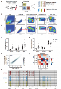 Single-cell RNA-seq reveals changes in cell cycle and differentiation programs upon aging of hematopoietic stem cells