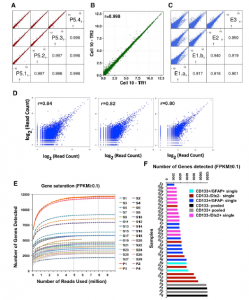 Single-Cell Transcriptome Analyses Reveal Signals to Activate Dormant Neural Stem Cells