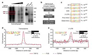 Distinct and shared functions of ALS-associated proteins TDP-43, FUS and TAF15 revealed by multisystem analyses