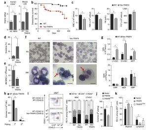 Ubiquitination of hnRNPA1 by TRAF6 links chronic innate immune signaling with myelodysplasia