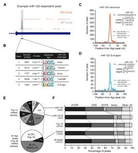 Argonaute CLIP Defines a Deregulated miR-122-Bound Transcriptome that Correlates with Patient Survival in Human Liver Cancer