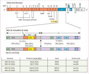 新冠论文02丨与2019年新型冠状病毒关联的家庭簇肺炎表明人与人之间的传播:一个家庭簇的研究